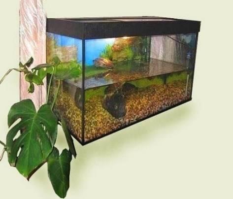 черепашка красноухая в домашних условиях